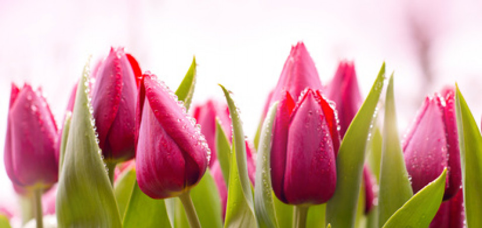 Je tu jaro – buďte na sebe opatrní