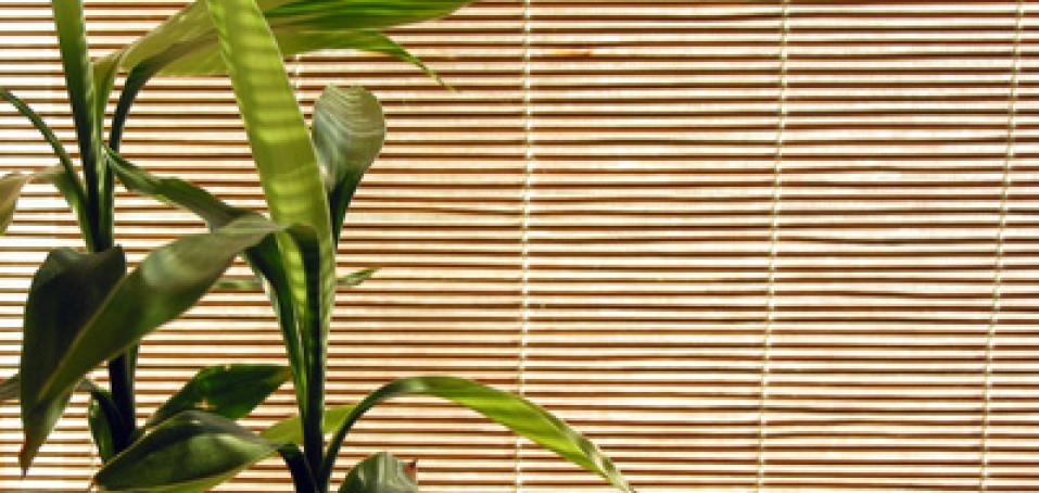 Oblečení z bambusu pomůže zvládnout horké letní dny