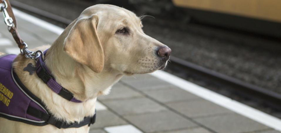 Deset důvodů, proč si při eresce pořídit asistenčního psa