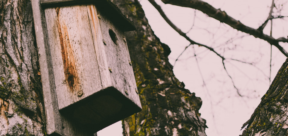 Příliš bohatá podzimní sklizeň? Nechte ji ptákům!