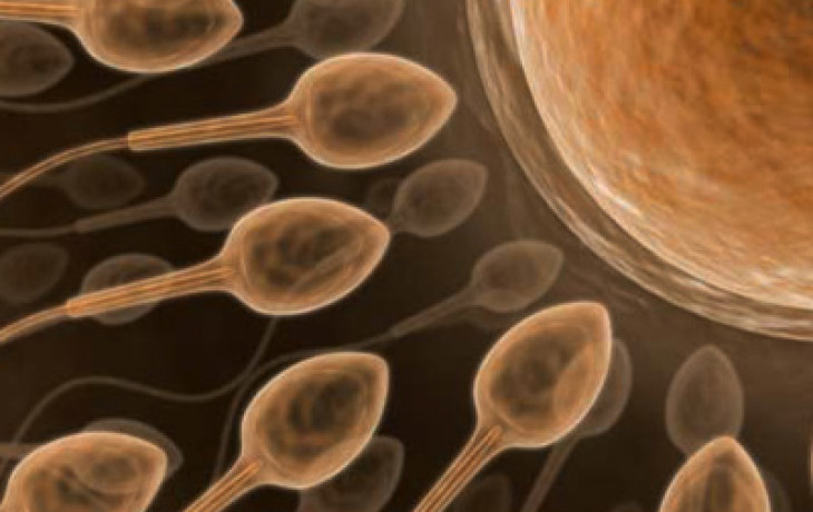 Darování spermatu: co je třeba vědět