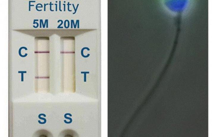 """I muži mají svůj """"těhotenský"""" test"""