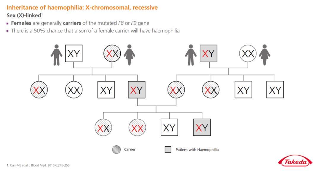 obrázek schéma článek hemofilie