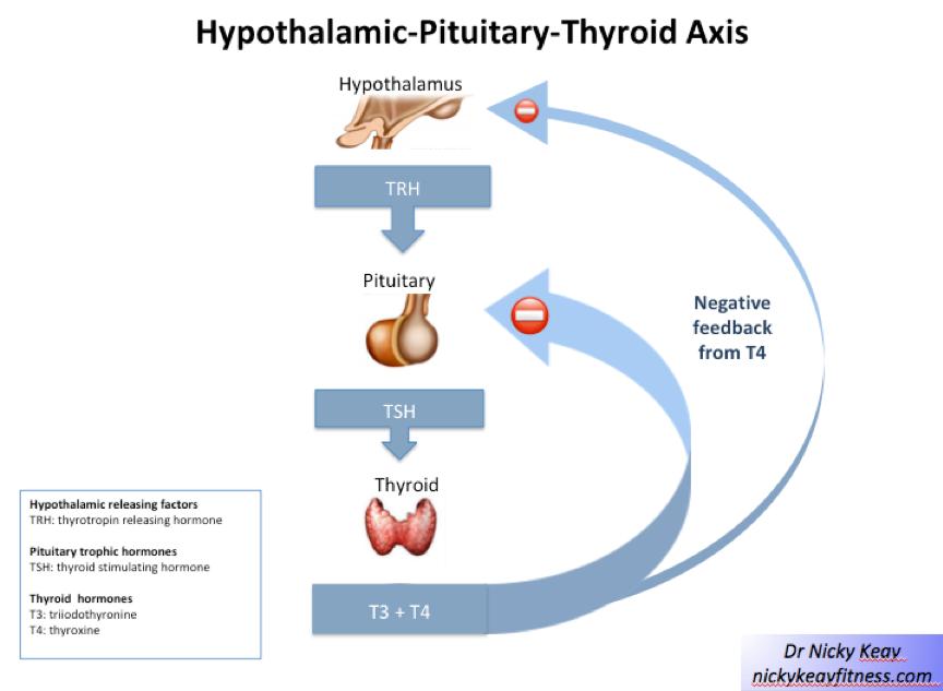 hypotyreoza japraktik